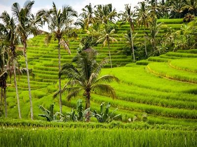 Bedugul and Tanah Lot Tour, Jatiluwih Rice Terrace
