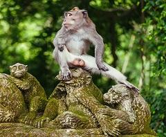 Full Day Ubud Tour, Ubud Monkey Forest